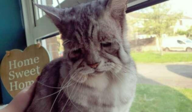 Gato Toby