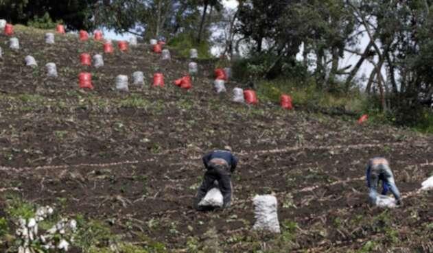 CAMPO COLOMBIANO/AGRICULTURA EN COLOMBIA/CAMPESINOS