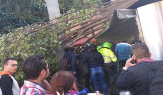 Caída de árbol en Chapinero