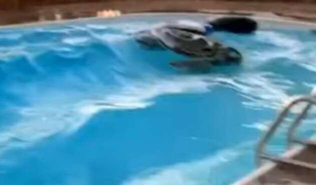 El terremoto en California, desde una piscina