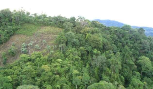En el último año, la deforestación aumentó en un 23% en el país.