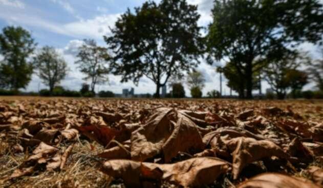 Emergencia agrícola