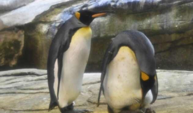 Pareja de pingüinos machos en Berlín.