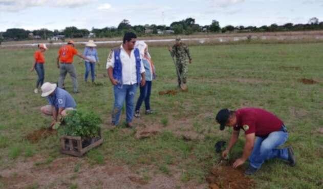 En Cumaribo siembran árboles para proteger fuentes hídricas