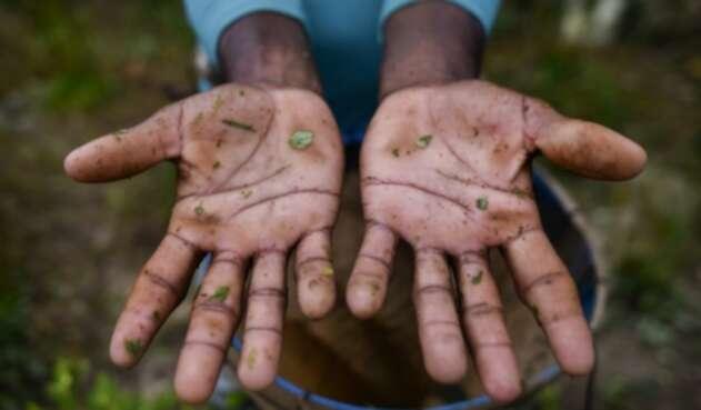Erradicación de cultivos