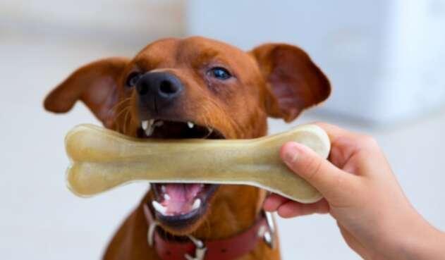 Perro - Mascota