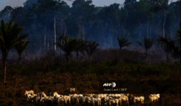 Donación en la ONU para la Amazonía y selvas tropicales