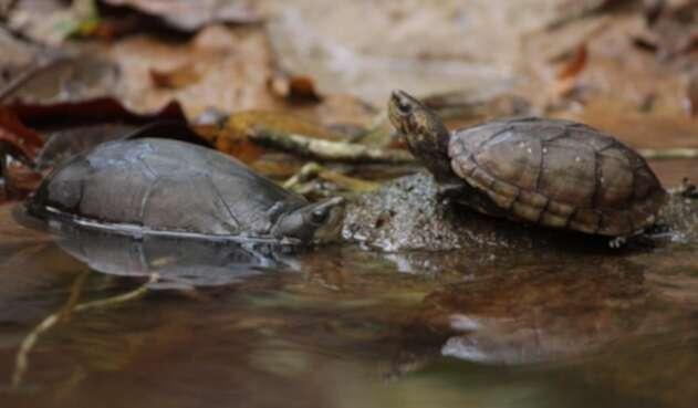 Especies silvestres que fueron liberadas en Bogotá.
