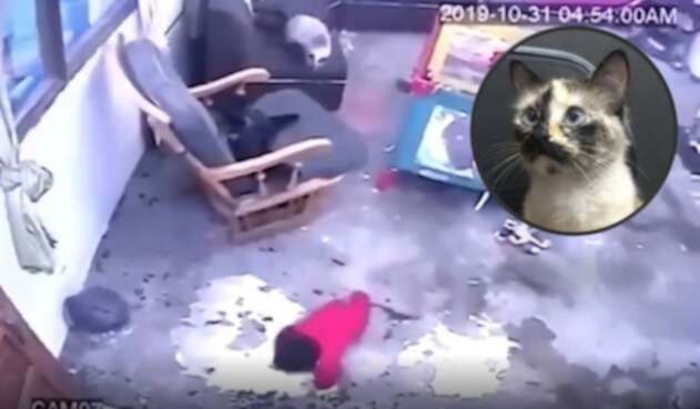 Una gata salvó la vida de un bebé