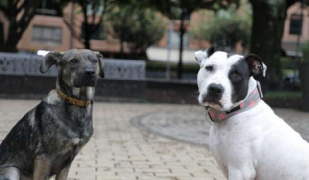 Mascotas callejeras que pueden ser adoptadas en Bogotá
