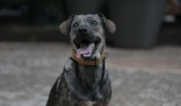 Mascotas en adopción, en Bogotá