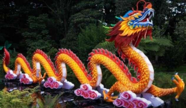 Hasta el 12 de enero el Festival Brilla Colombia rendirá un homenaje a la flora y fauna del país