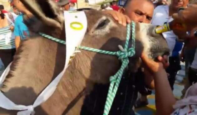 Maltrato a burros en Cundinamarca