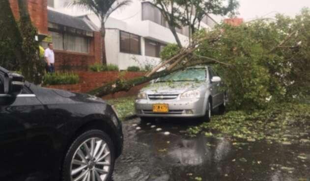 Árbol cayó sobre un carro en Cedritos