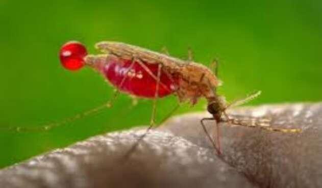 Malaria en el Catatumbo