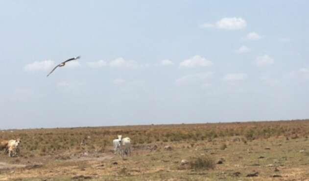 Sequía en los llanos orientales