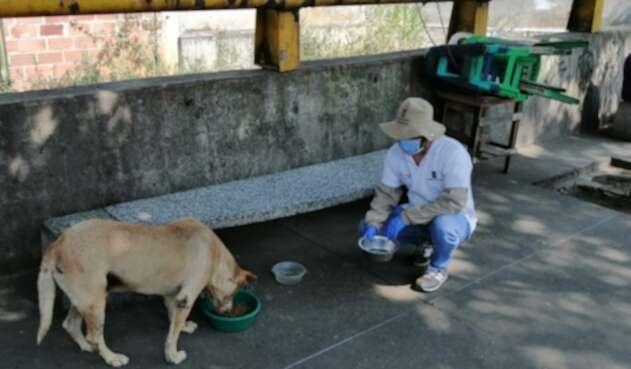 Entregan alimento a animales callejeros en Medellín.