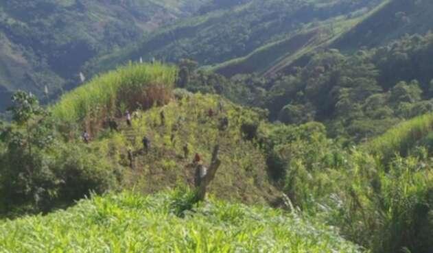 Erradicación de cultivos ilícitos en Campamento, Antioquia.