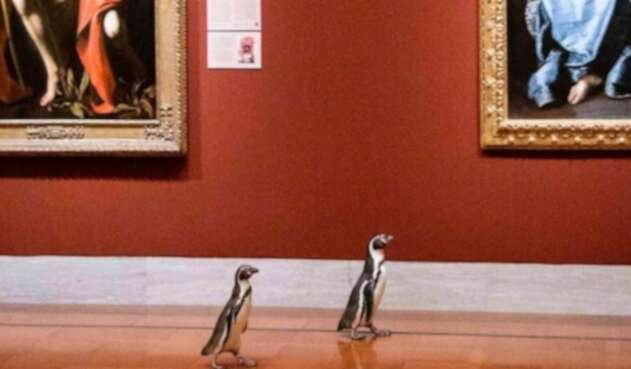 Pingüinos visitan museo y se sorprenden