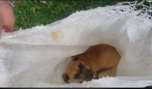 Perro maltratado y abandonado en Ubaté (Cundinamarca)
