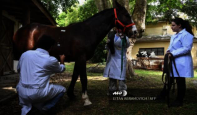 Argentina hace ensayos para el coronavirus con suero equino