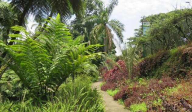 Jardín Botánico del Quindío.