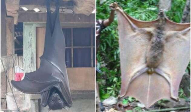 Murciélagos gigantes