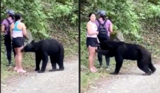 Oso ataca a turista