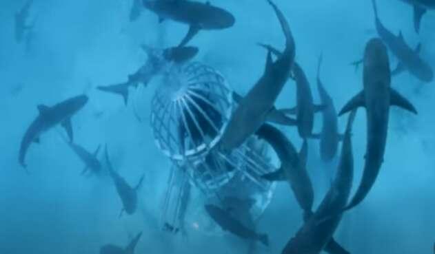 Experimento con sangre en tiburones