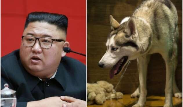 Kim Jong ordena que los perros en la capital de Corea del Norte sean confiscados