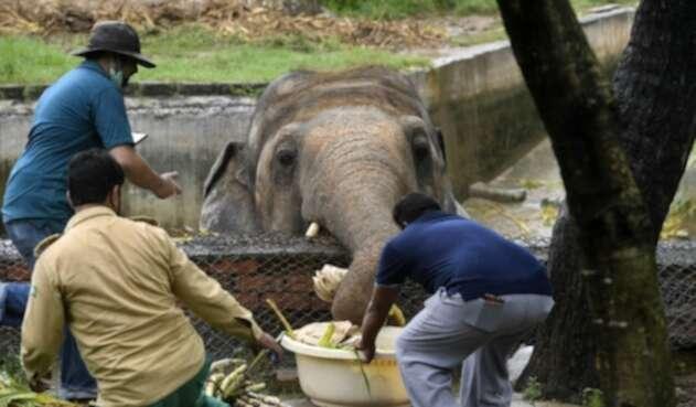 Elefante en Zoológico
