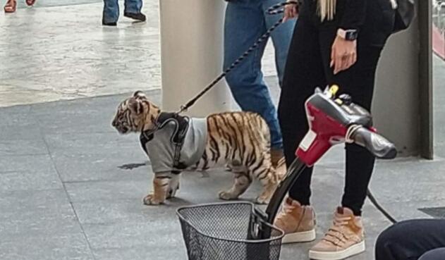 Mujer es criticada por pasear en un centro comercial con su cachorro de tigre