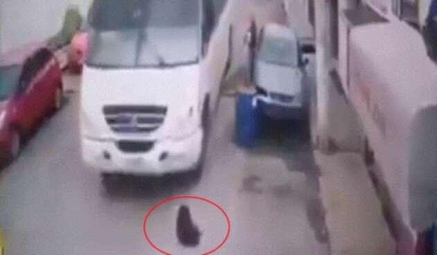 Sin razón, chofer le pasó su bus por encima a un perro y lo mató en México