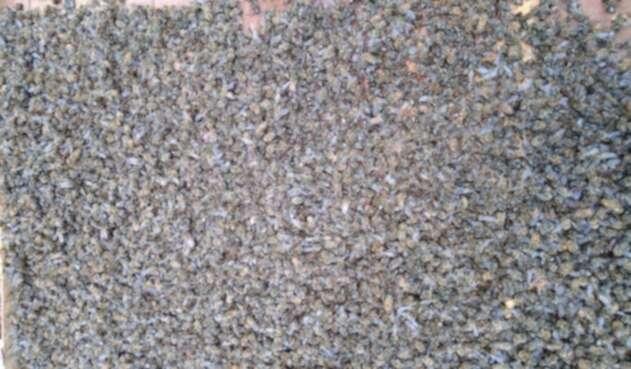 Las colmenas afectadas pueden ser más según las denuncias de los apicultores