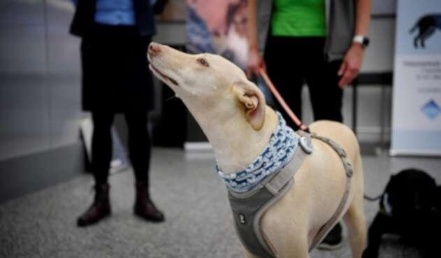 Perros en aeropuertos