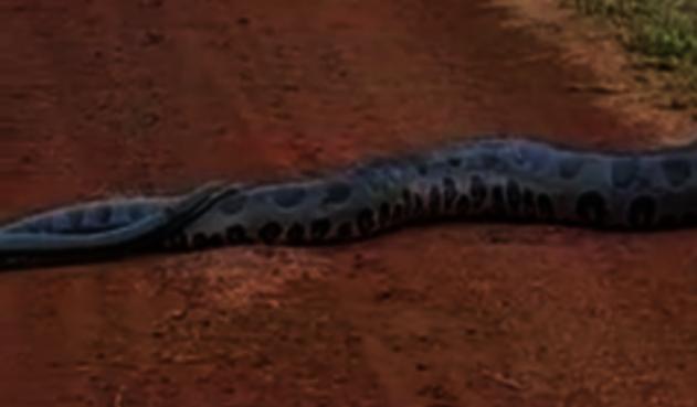 Anaconda en Brasil