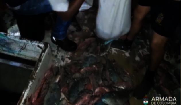 Incautan pescado en San Andrés