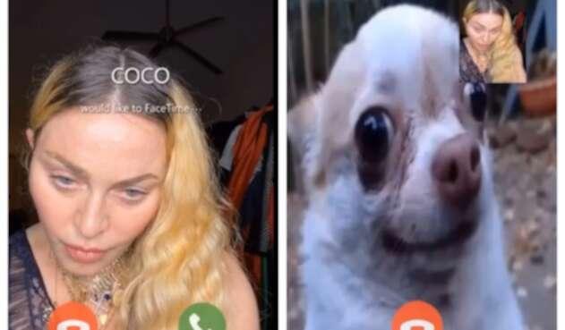 Madonna hace videollamada a perro