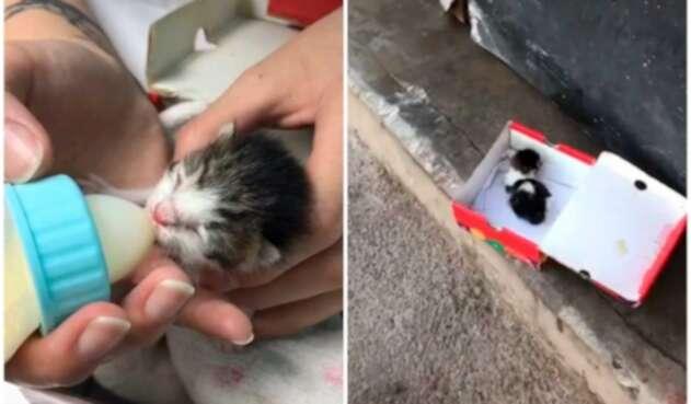 Salvan a gatito calle de Chile y ahora luce impecable