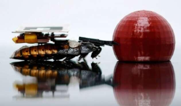 Estas son las cucarachas robot.