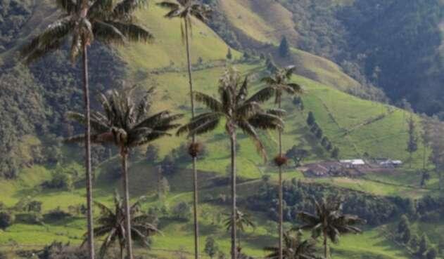 Valle de Cocora - Steven Birding Quindío