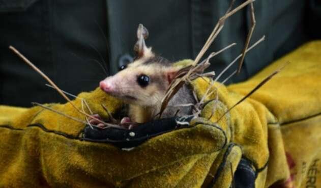 Animales silvestres fueron liberados en el Huila