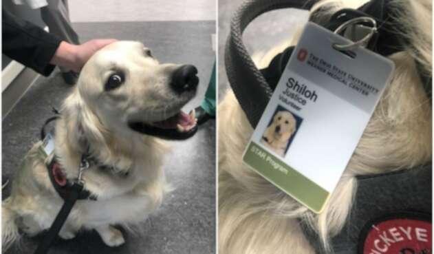 Perro con trabajo