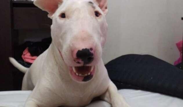'Apolo', víctima de maltrato animal en Medellín
