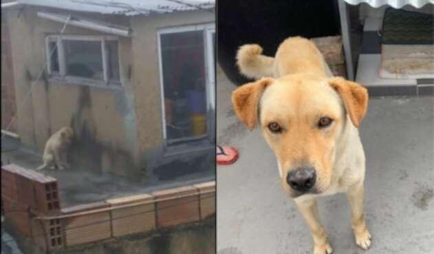 Perro en terraza de casa en Usme