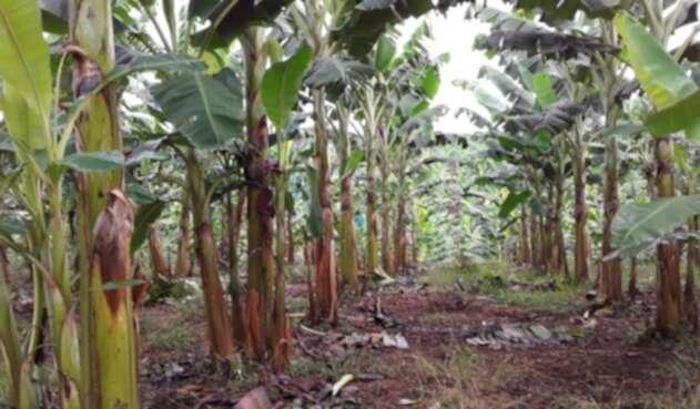 Los líderes productores están buscando los mecanismos para acceder al seguro de cosecha