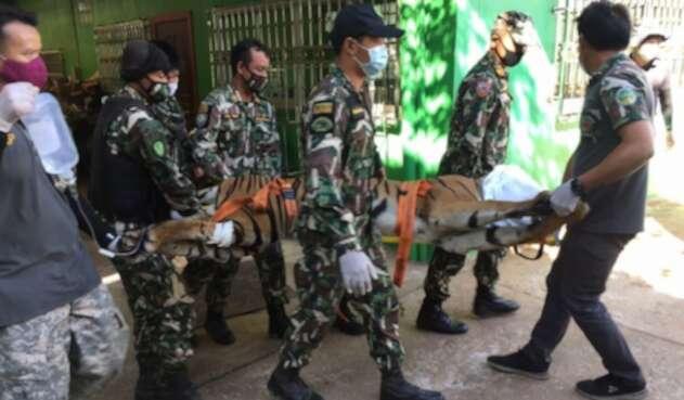Hallan un tigre decapitado en un falso zoológico de Tailandia