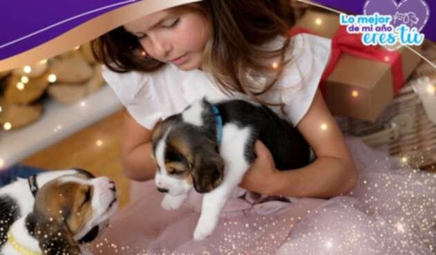La decisión de tener una mascota en la familia, se debe tomar con responsabilidad.