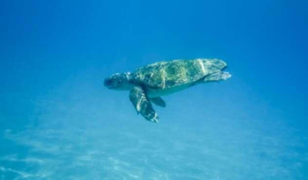 Tortuga / vida en el mar