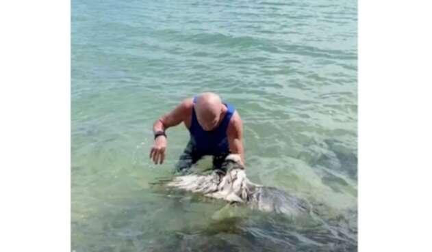 Águila salvada por un hombre en el océano